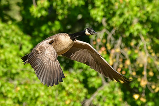 concentrated flight