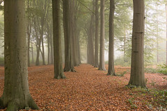 Autumn (Martine Lambrechts) Tags: autumn tree nature landscape foggy leaves