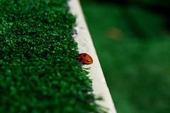 Little girl (Lovelydetails) Tags: animal gorria rojo red little mariquita verde green budapest