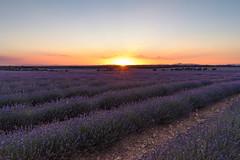 Sunset (robe_mac) Tags: sunset atardecer sun light lavanda sony a7ii fullframe landscape paisaje purple morado sky cielo