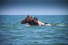 IMG_3701 (aochlesia13) Tags: camargue cheval equitation eos500d complicité emotion