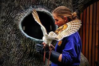 Barn Owl, Zoo Atlanta, Georgia