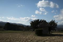 0375 (Shota Fukuda) Tags: 日本 japan 岩手県 遠野 神社 shintoshrine 荒神神社