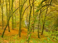 Waldhang zur Lieser (Jörg Paul Kaspari) Tags: dieliesertaltour wanderung herbst autumn fall eifel vulkaneifel herbstwald