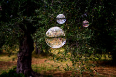 Ulivi di sapone ;) (DarioMarulli) Tags: abruzzo alberi albero allaperto bolle bolledisapone ulivi ulivo olive toccodacasauria