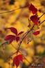 Aux couleurs d'octobre... / In octobers colour! (Pentax_clic) Tags: octobre 2017 robert warren feuille automne vaudreuil quebec imgp4713 pentax kx