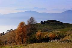 Autumn in Montecampione (annalisabianchetti) Tags: autumn autunno alps mountains montagne trees alberi landscape paesaggio montecampione vallecamonica italy