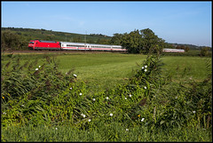 Im Laubenheimer-Bodenheimer Ried (FNIS) Tags: eisenbahn rheinlandpfalz ic br101 bodenheimerried