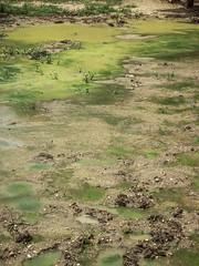 DSCF9126 (www.julkastro.co) Tags: tropico ayapel planetarica finca bufalo criadero lagartos zoocriadero animales fotografiadocumental antioquia cordoba colombia farm buffalo agriculture land terra