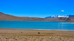 Landscape (sudarshini) Tags: ladakh lake leh landscapes nature jammukashmir incredibleindia travel wildanimals blue horses himalayas