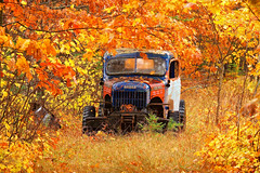 dodge power wagon (twurdemann) Tags: abandoned autumn canada canopy decay dodge fall2017 fallcolor fallcolour forest fujixt1 hiltonbeach junk landscape leaves northernontario ontario powerwagon rain rural stjosephisland toad trail trees truck weather wind xf55200mm