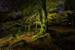 Twilight wood II (J C Mills Photography) Tags: peak district derbyshire light painting night gorge long exposure beech fagus padley longshaw estate