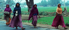 Rajasthan India Rural Scene Local Ladies Early Morning Feb 1990 479a (photographer695) Tags: rajasthan india rural scene local ladies early morning feb 1990