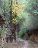 Forest gorge (fotoswietokrzyskie) Tags: wood tree trees grass forest road mamiya rz67ii kodak ektar100 medium format analog 6x7 landscapes foliage gorge ravine