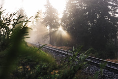 Rays for days (Gruenewiese86) Tags: 2017 brocken harz nebel wald instameet explore exploreharz harzer sunbeam rays sunrays morning misty mood moody harzlandschaft sunrise rails railway brockentour instahike imharz17