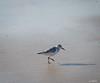 07112017_1981.jpg (aloha033) Tags: oiseau ocean animal lasalie nature