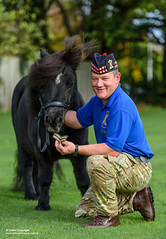 Royal Regiment of Scotlands Cruachan IV's Promotion (Defence Images) Tags: consentheld consent stable royalregimentofscotland shetlandpony cruachan promotion horse equine britisharmy stables scotland army mascot regiments theroyalregimentofscotland defence free defense uk british military