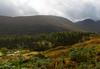 Glen Lyon (Mr_Souter) Tags: glenlyon ferns scotland water autumn 2017 trees places europe september uk