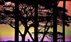 Gateway to Africa (flowergirlaaa) Tags: gateway door window rainbow glass silhouette tree savannah hss sliderssunday