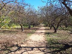 A sunny autumn Sunday. (Κώστας Καϊσίδης) Tags: outdoor outside nature greece sunday walk sygrouestate pistaciavera autumn sky scenery