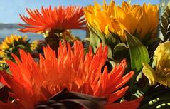 Happy Thanksgiving! (peggyhr) Tags: peggyhr flowers sunshine orange yellow green vancouver bc canada autumn bouquet interestingnature heartawards niceasitgets~level1 niceasitgets~level2 niceasitgets~level3 carolinasfarmfriends thegalaxy thegalaxystars