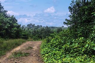 PISTA NELLA FORESTA.   ----    TRACK IN THE FOREST