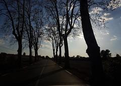 route de platanes (srouve78) Tags: road clouds
