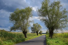 summer moods (JoannaRB2009) Tags: summer mood nature landscape view tree trees willow road path alley avenue clouds sky green fields sunny greaterpoland wielkopolska polska poland
