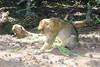 2013-07-21 14-38-48 Montagne des singes.jpg (beckendorf.marc) Tags: fra france alsacechampagneardennelorraine kintzheim alsacechampagneardennelorrain