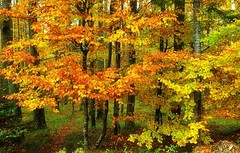 J'aime l'automne ! (mamietherese1) Tags: ngc autumn npc earthmarvels50earthfaves world100f 200v200c2000v esenciadelanaturaleza phvalue heavenlycaptures coppercloudsilvernsun