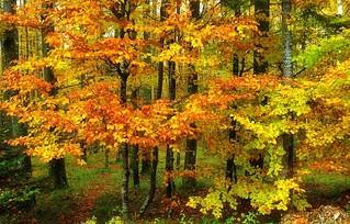 J'aime l'automne !
