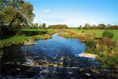 landscape.......... (atsjebosma) Tags: dog landscape landschap roden drenthe sterrebos atsjebosma autumn herfst october 2017 boom gras peizerdiep ngc coth5 npc