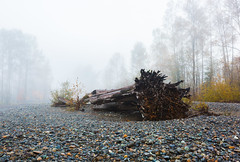 Onlookers Of The Departed (John Westrock) Tags: nature trees log rocks fog foggy autumn fall morning washingtonstate pacificnorthwest canoneos5dmarkiii canonef2470mmf28lusm snoqualmie