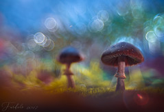 Autumn dreams.... (Fardels.) Tags: bokeh ambiente fardels galicia setas mushroom