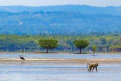Mangroves at Gazi bay