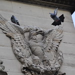 Ailes / wings thumbnail