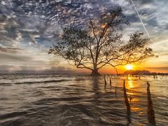 170827 ~ IMG_6499 ~ teguh (alongbc) Tags: telukgong masjidtanah melaka malaysia travel place trip sundown nature environment seascape cloud lowtide canon eos700d canoneos700d canonlens 10mm18mm wideangle