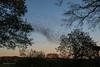 DSC_1227 (Birdiebirdbrain) Tags: starlings starling stær stære fugle birds birdphotography starlingmagic sortsol blacksun nature naturephotography natur naturfoto ribe denmark danmark nikon nikond3300 tamron tamron18270mm