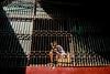Trapped (Yeow8) Tags: ricohgr21 agfavista400 yangon myanmar filmphotography filmphotographer filmisnotdead filmimage filmcommunity ishootfilm streetportrait streetphotography streetphotographer portrait portraiture portraiturephotography streetportraitphotography kid light shadow lightshadow