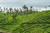 Valparai Worked-1-7 (RR Fotography) Tags: teaestate tea leaves trees mountains tamilnadu india photography rrphotography tealeaves sky green blue