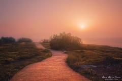 La Galea (Mimadeo) Tags: path park sunrise sunset sun outdoor coast getxo sea pathway trail pavingstones bush ocean footpath bizkaia vizcaya paisvasco euskadi basquecountry spain beautiful idyllic dreamy
