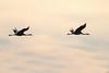 Kraniche (waltsphoto) Tags: kraniche zugvögel herbstzeit himmel wolkenlandschaft sonnenuntergang