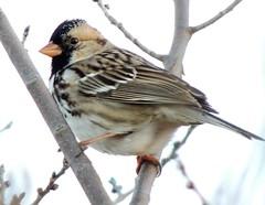 hang on....Thank You. IN EXPLORE! (rdedks2011) Tags: bird nature outdoors kansas