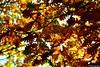 Blätterdach (DJR-FOTO) Tags: herbst autumn orange red rot grün sunlight sonnenlicht 4k uhd dortmund germany deutschland new awsome great