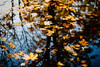 Tranquil (ewitsoe) Tags: leaves water leavesfloatingonwater auutmn fall nikond80 35mm ewitsoe park lake reflect reflection reflecting trees forest brook stream city urban poznan poland europe goldenfall