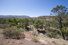Another View from the Information Bay (oz_lightning) Tags: australia brachinagorge canon6d canonef1635mmf4lis flindersranges flindersrangesnp sa geology landscape nature sedimentary flindersrangesnationalpark southaustralia aus