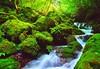 A mountain stream in the early autumn 5 (chikaraamano) Tags: green lovely moss clear water stones outdoor bigrocks mountain valley creature earlyautumn stream flow ravine finally forest upstream charmed repeatedly naturallight freely flows