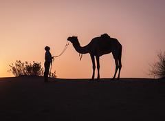 Rajasthan - Jaisalmer - Desert Safari with Camels-56