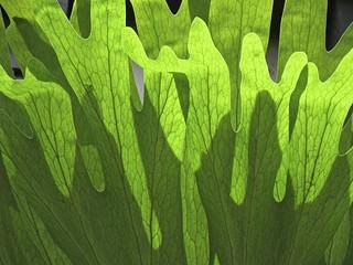 green veins...