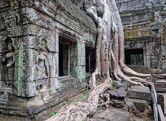 angkor wat cambodia world heritage travel nexus p6 huawei... (Photo: Clemens Kubenka on Flickr)